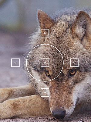 Wolfcenter, Frank Faß, Onlineshop, Veranstaltungen, Fotoworkshop, Fotografie