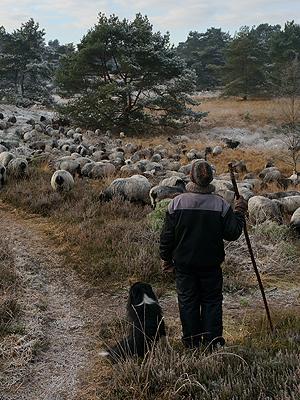Wolfcenter, Frank Faß, Onlineshop, Veranstaltung, Seminar, Herdenschutz, Schafe, Hütehunde, Herdenschutzhund
