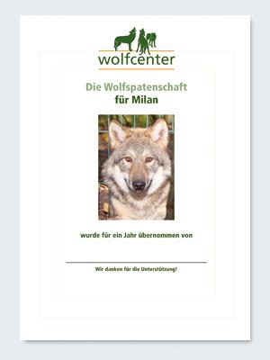 Wolfcenter, Onlineshop, Patenschaften, Wolf, Wolfspatenschaft, europäischer Grauwolf, Milan