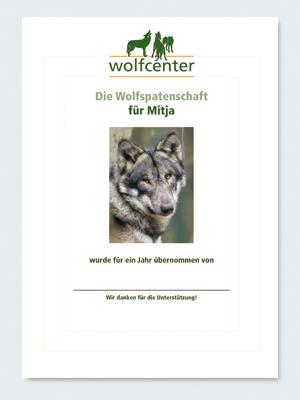 Wolfcenter, Onlineshop, Patenschaften, Wolf, Wolfspatenschaft, europäischer Grauwolf, Mitja