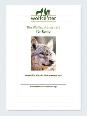 Wolfcenter, Onlineshop, Patenschaften, Wolf, Wolfspatenschaft, europäischer Grauwolf, Remo