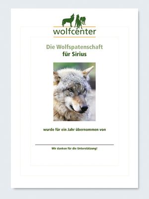 Wolfcenter, Onlineshop, Patenschaften, Wolf, Wolfspatenschaft, europäischer Grauwolf, Sirius
