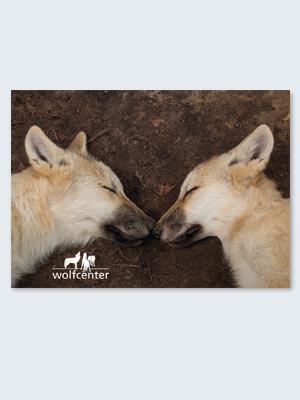 Wolfcenter, Onlineshop, Bilder, Postkarten, Welpen, Wölfe, kuscheln