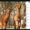 Wolfcenter Dörverden, Onlineshop, Kalender