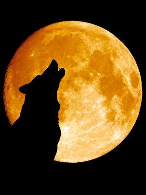 Wolfcenter Dörverden, Onlineshop, Abend unter Wölfen, Mit Wölfen bei Vollmond um Mitternacht heulen